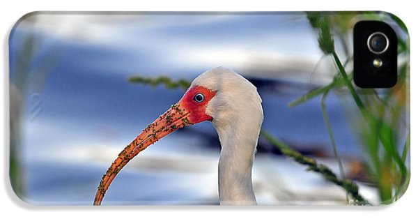 Intriguing Ibis IPhone 5s Case by Al Powell Photography USA