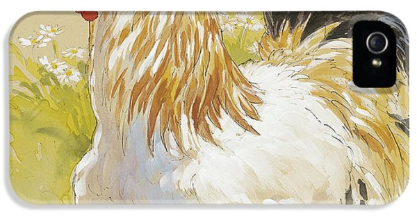 Rooster iPhone 5s Case - White Rooster by Tracie Thompson
