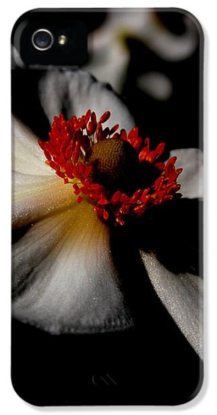 iPhone 5s Case - White Spring by Orphelia Aristal