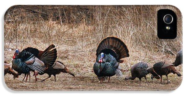 Wild Turkeys IPhone 5s Case by Lori Deiter