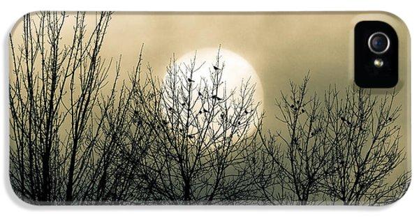 Winter Into Spring IPhone 5s Case by Bob Orsillo