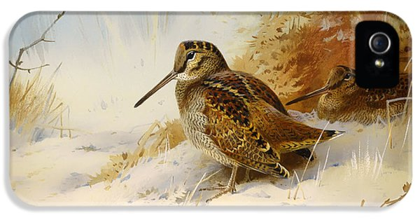 Winter Woodcock IPhone 5s Case by Mountain Dreams