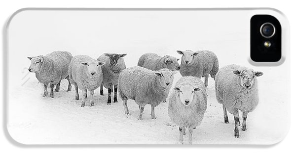 Sheep iPhone 5s Case - Winter Woollies by Janet Burdon