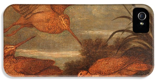 Woodcock At Dusk, Francis Barlow, 1626-1702 IPhone 5s Case by Litz Collection