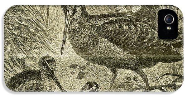 Woodcock Austria 1891 IPhone 5s Case by Austrian School