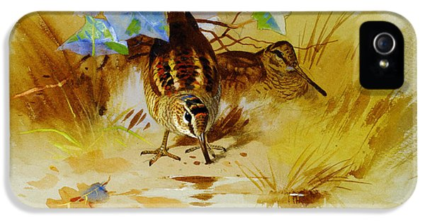 Woodcock In A Sandy Hollow IPhone 5s Case by Celestial Images