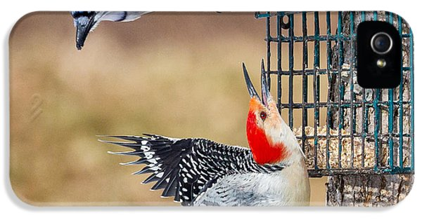 Woodpeckers And Blue Jays Square IPhone 5s Case by Bill Wakeley