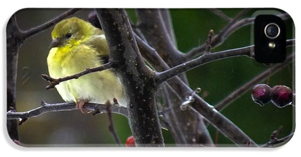 Yellow Finch IPhone 5s Case