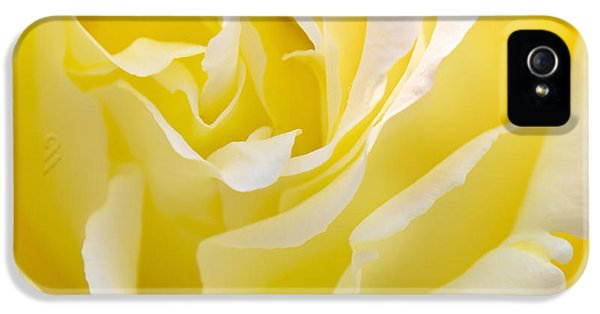 Rose iPhone 5s Case - Yellow Rose by Svetlana Sewell