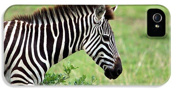 Zebra IPhone 5s Case