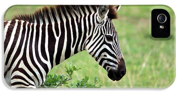 Zebra IPhone 5s Case by Aidan Moran