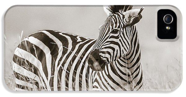 Zebra Masai Mara Kenya IPhone 5s Case