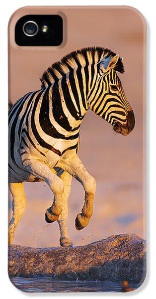 Zebras Jump From Waterhole IPhone 5s Case by Johan Swanepoel