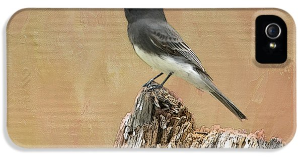Black Phoebe IPhone 5s Case