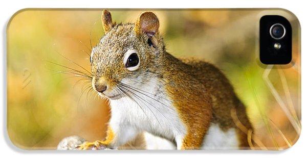 Cute Red Squirrel Closeup IPhone 5s Case