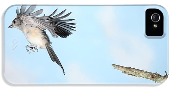 Tufted Titmouse In Flight IPhone 5s Case by Ted Kinsman