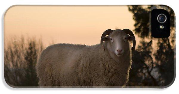 Sheep iPhone 5s Case - The Lamb by Angel Ciesniarska