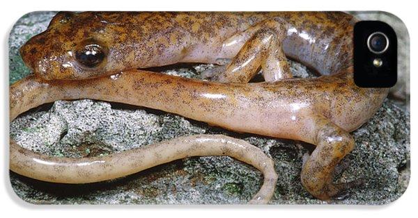 Cave Salamander IPhone 5s Case by Dante Fenolio