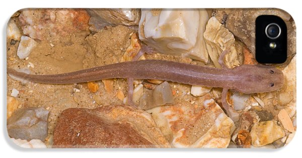 Ozark Blind Cave Salamander IPhone 5s Case