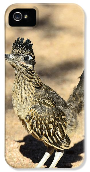 A Baby Roadrunner  IPhone 5s Case