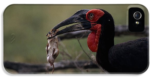A Southern Ground Hornbill Prepares IPhone 5s Case
