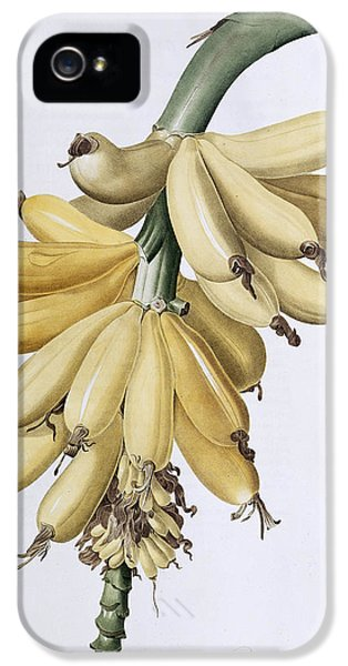 Banana IPhone 5s Case