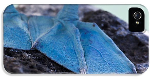 Blue Footed Booby IPhone 5s Case