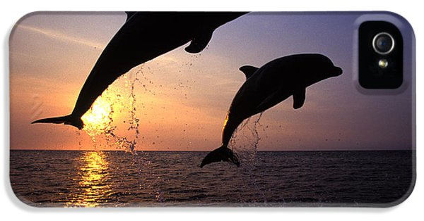 Bottlenose Dolphins IPhone 5s Case by Francois Gohier and Photo Researchers