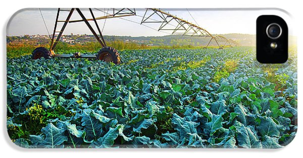 Cabbage Growth IPhone 5s Case by Carlos Caetano