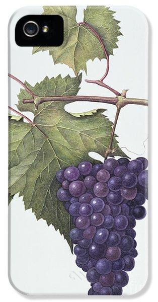 Grapes  IPhone 5s Case by Margaret Ann Eden