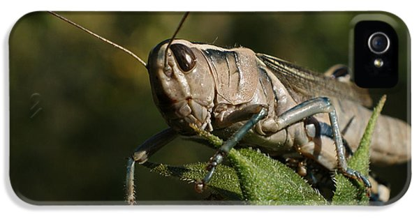 Grasshopper 2 IPhone 5s Case by Ernie Echols