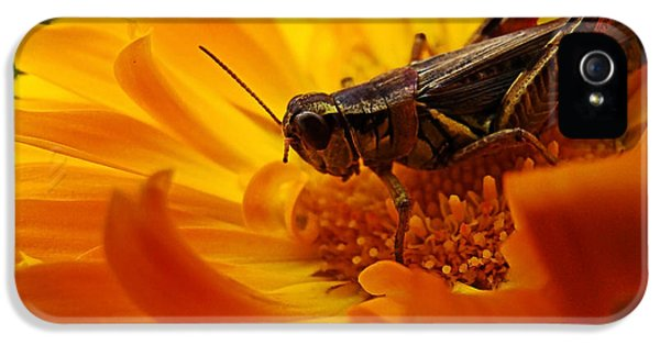 Grasshopper iPhone 5s Case - Grasshopper Luncheon by Lianne Schneider