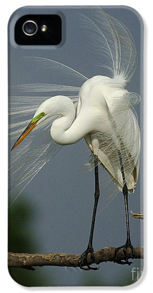 Great Egret IPhone 5s Case by Bob Christopher