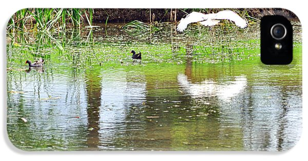 Ibis Over His Reflection IPhone 5s Case by Kaye Menner