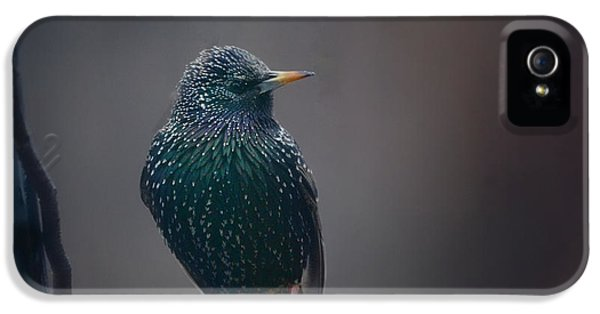 Starlings iPhone 5s Case - Infamous by Susan Capuano