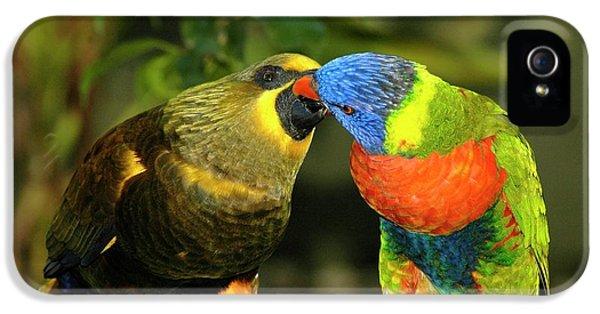 Kissing Birds IPhone 5s Case