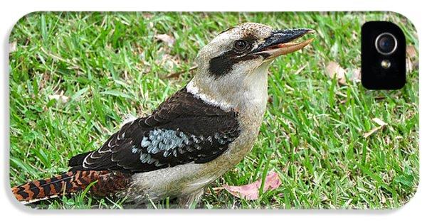 Laughing Kookaburra IPhone 5s Case by Kaye Menner