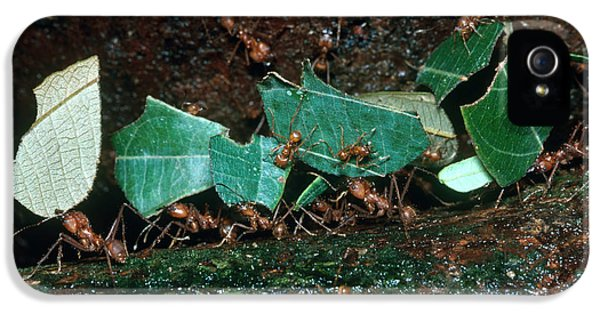 Leafcutter Ants IPhone 5s Case by Gregory G. Dimijian