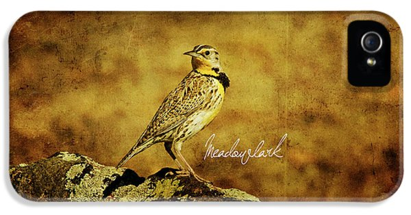 Meadowlark iPhone 5s Case - Meadowlark by Lana Trussell