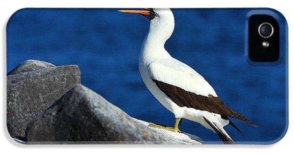 Nazca Booby IPhone 5s Case