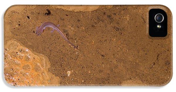Ozark Blind Cave Salamander IPhone 5s Case by Dante Fenolio
