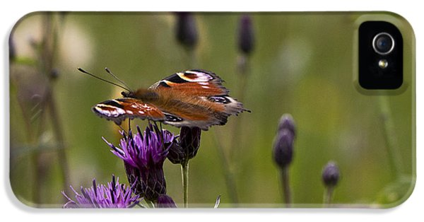 Peacock Butterfly On Knapweed IPhone 5s Case