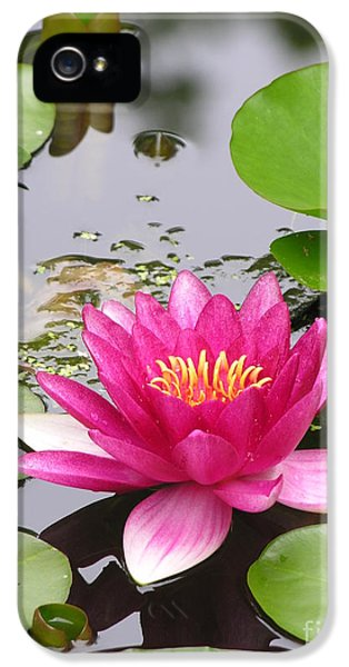 Pink Lily Flower  IPhone 5s Case by Diane Greco-Lesser