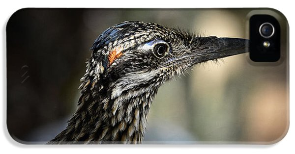 Portrait Of A Roadrunner  IPhone 5s Case