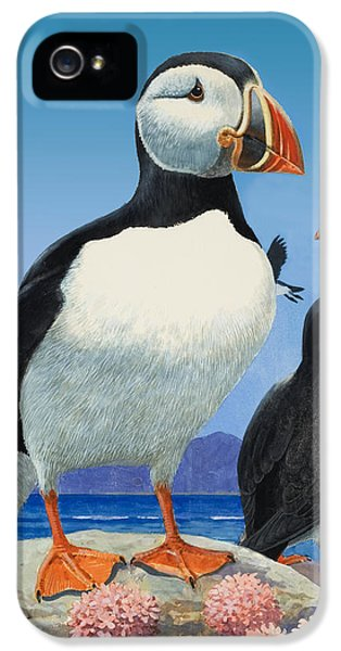 Puffins IPhone 5s Case