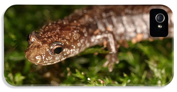 Red-backed Salamander IPhone 5s Case by Ted Kinsman