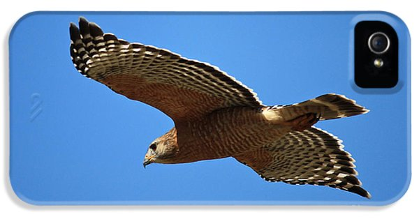 Red Shouldered Hawk In Flight IPhone 5s Case by Carol Groenen