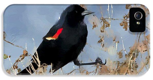 Redwing Blackbird IPhone 5s Case by Betty LaRue