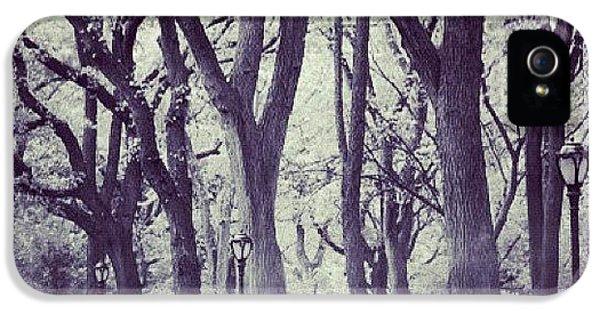 City iPhone 5s Case - Seasons Change by Randy Lemoine