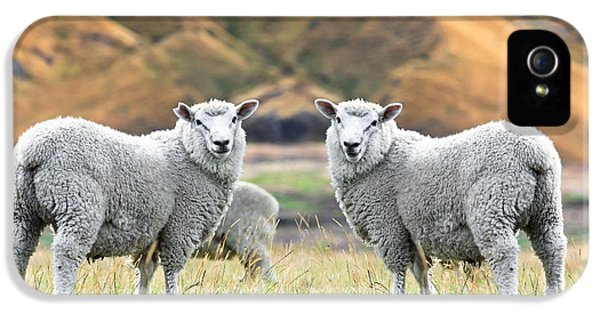 Sheep iPhone 5s Case - Sheeps by MotHaiBaPhoto Prints